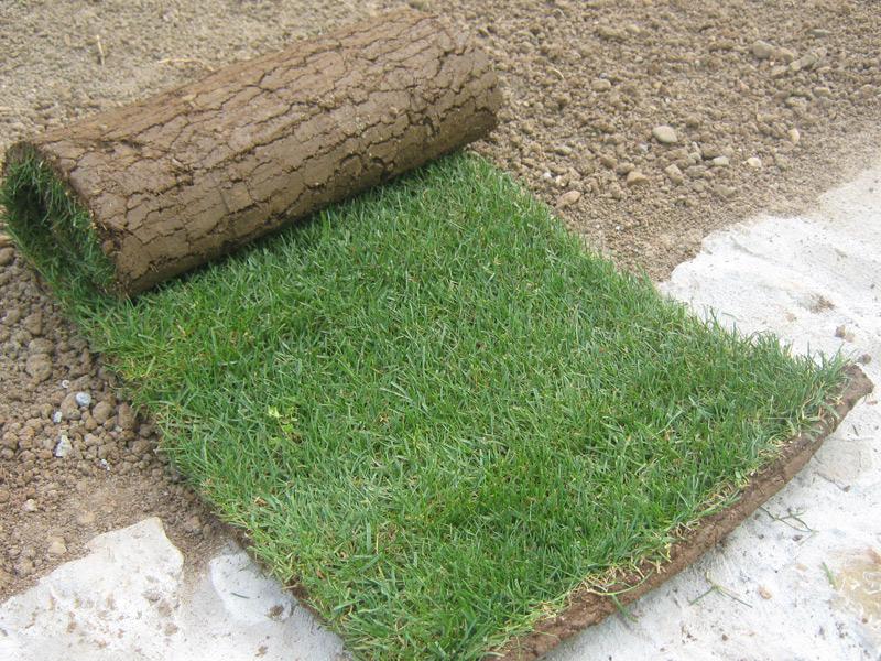 Produzione vendita diretta tappeti erbosi a bergamo zampetti for Erba in rotoli